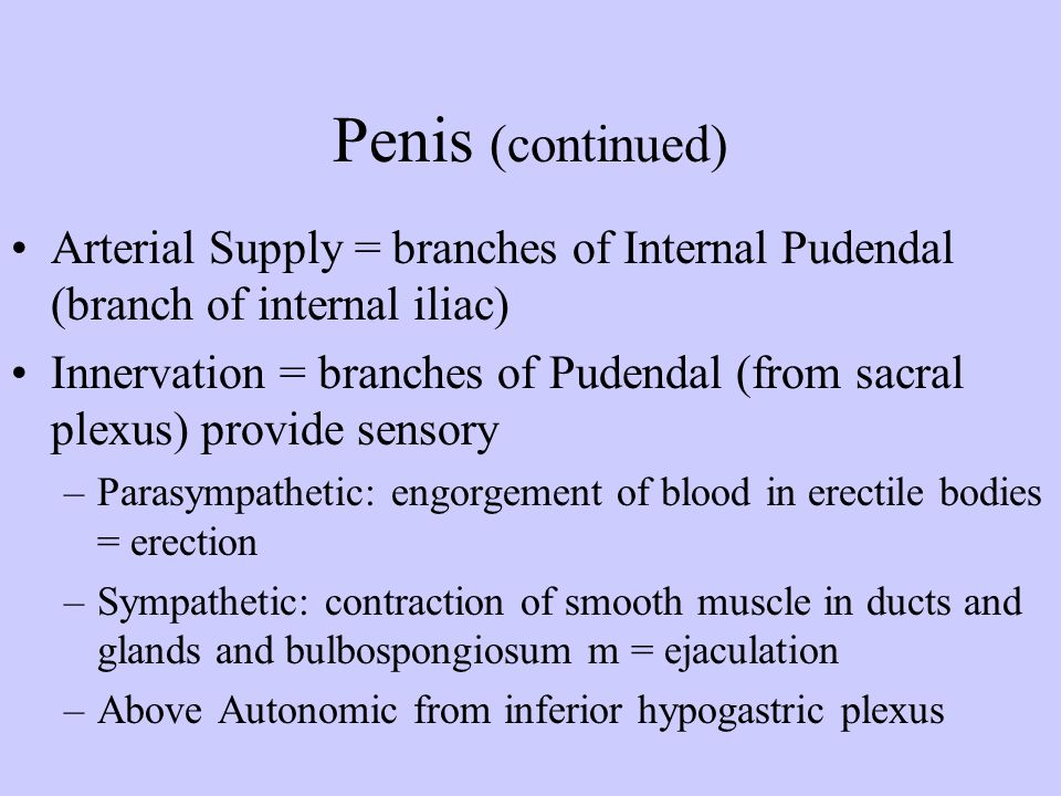 Penis (continued) Arterial Supply = branches of Internal Pudendal (branch of internal iliac)