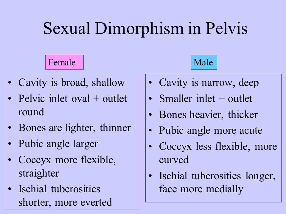 Sexual Dimorphism in Pelvis