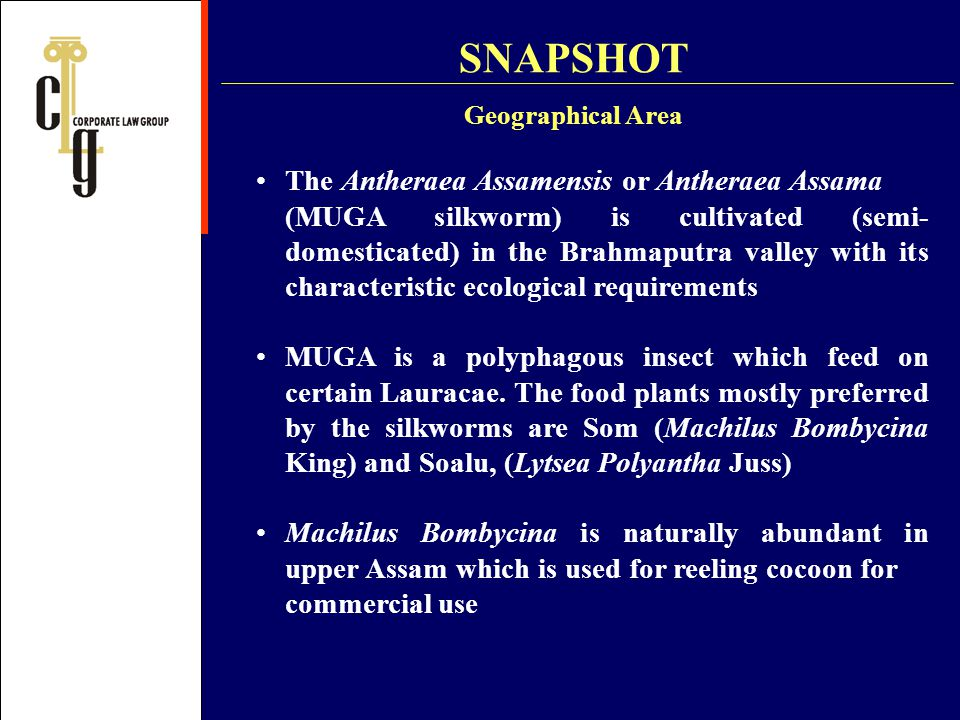 SNAPSHOT The Antheraea Assamensis or Antheraea Assama