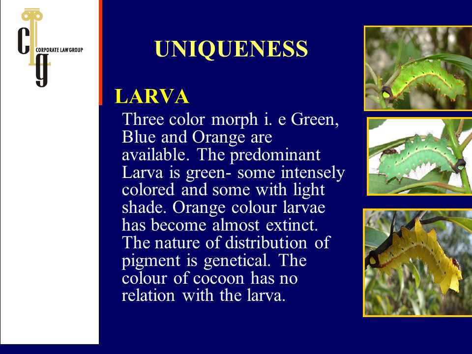 UNIQUENESS LARVA.