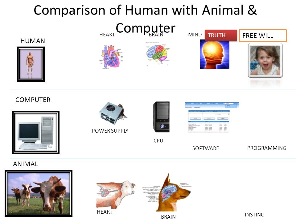 Comparison of Human with Animal & Computer