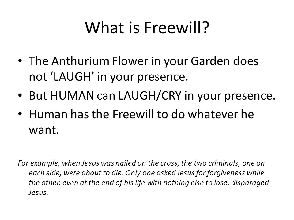 What is Freewill The Anthurium Flower in your Garden does not 'LAUGH' in your presence. But HUMAN can LAUGH/CRY in your presence.