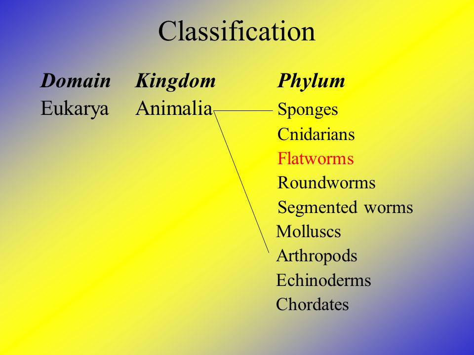 Classification Domain Kingdom Phylum Eukarya Animalia Sponges