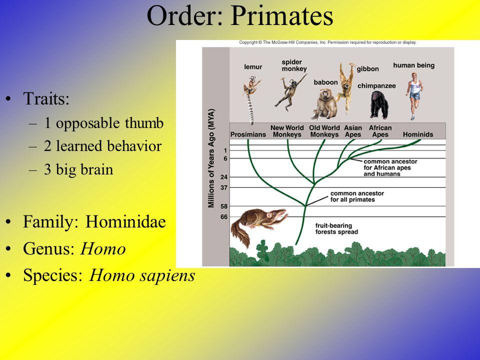 Order: Primates Traits: Family: Hominidae Genus: Homo