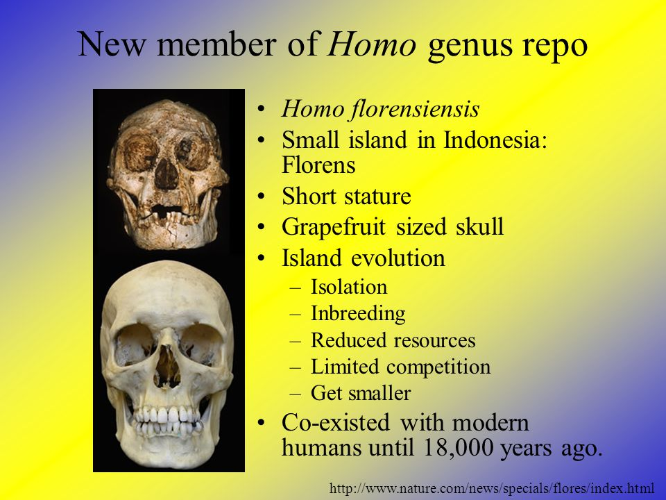 New member of Homo genus repo