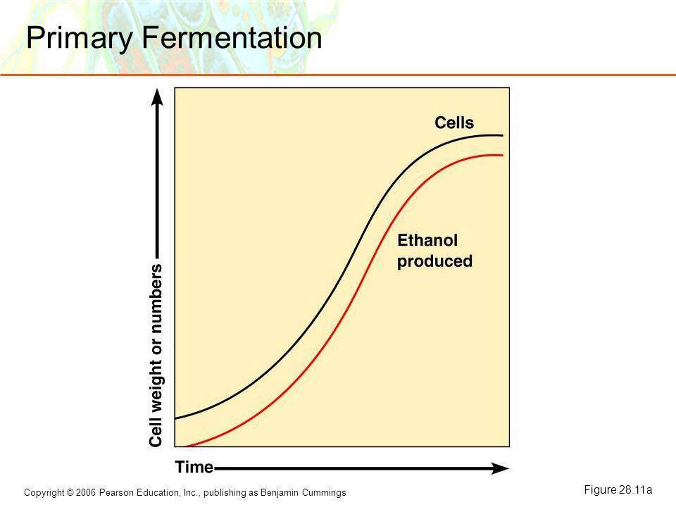 Primary Fermentation Figure 28.11a