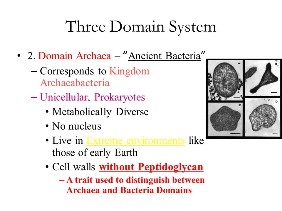 Three Domain System 2. Domain Archaea – Ancient Bacteria