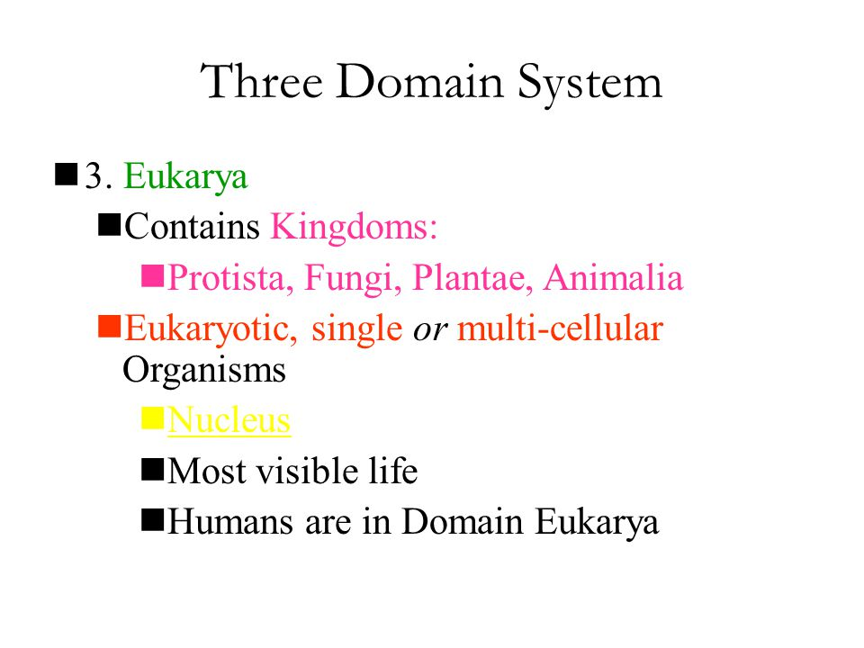 Three Domain System 3. Eukarya Contains Kingdoms: