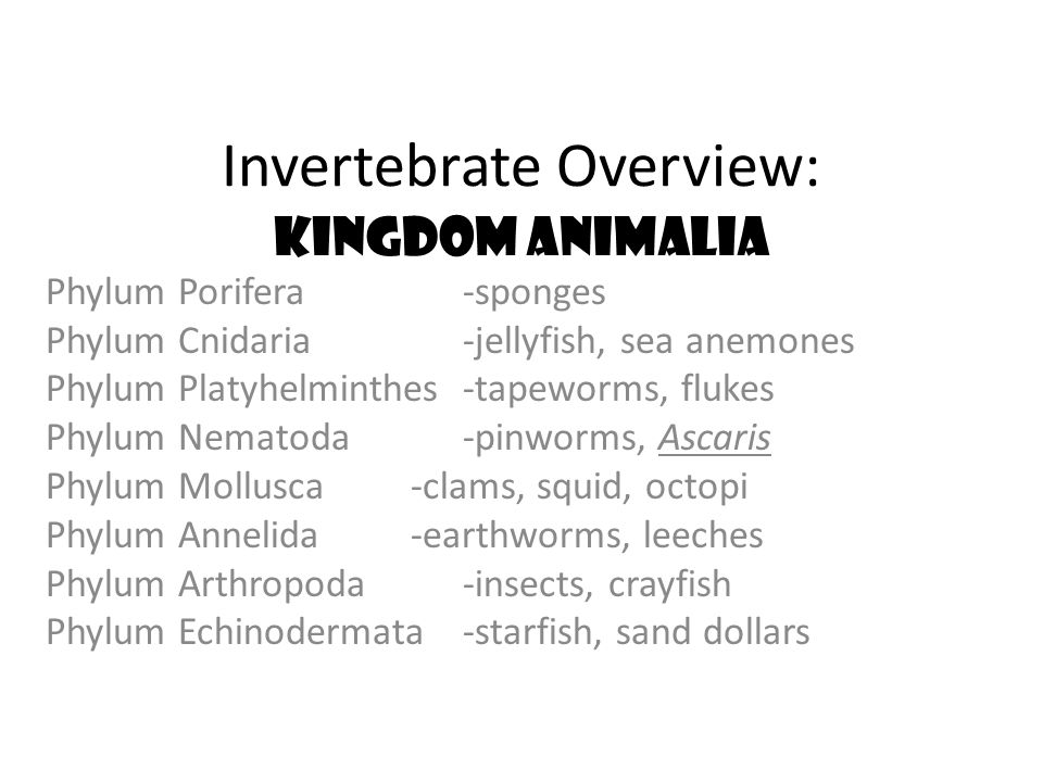 Invertebrate Overview: Kingdom Animalia