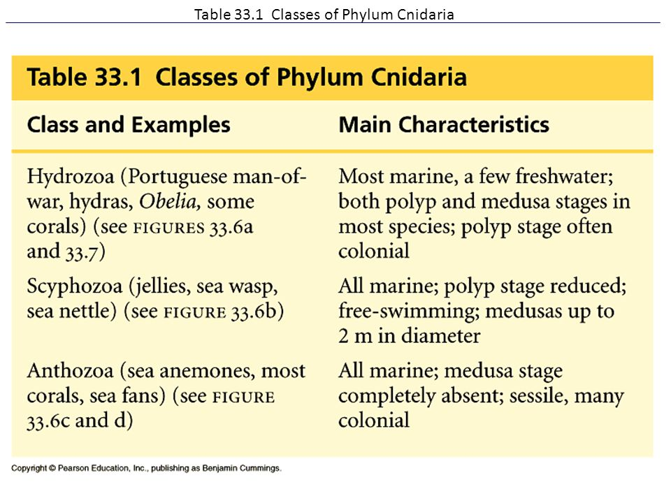 Table 33.1 Classes of Phylum Cnidaria