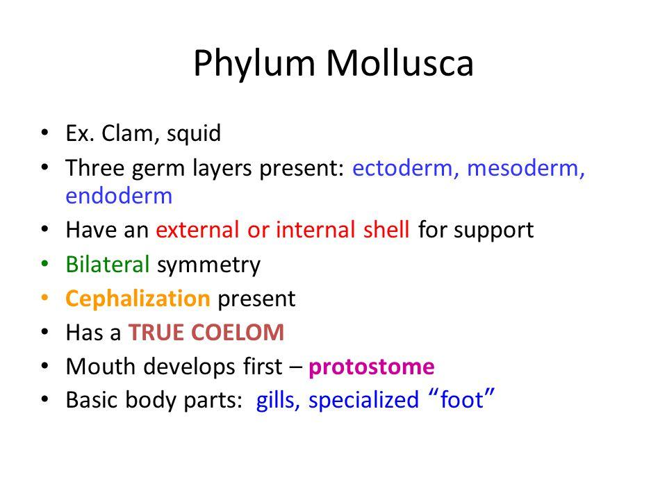 Phylum Mollusca Ex. Clam, squid