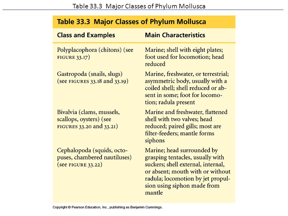 Table 33.3 Major Classes of Phylum Mollusca