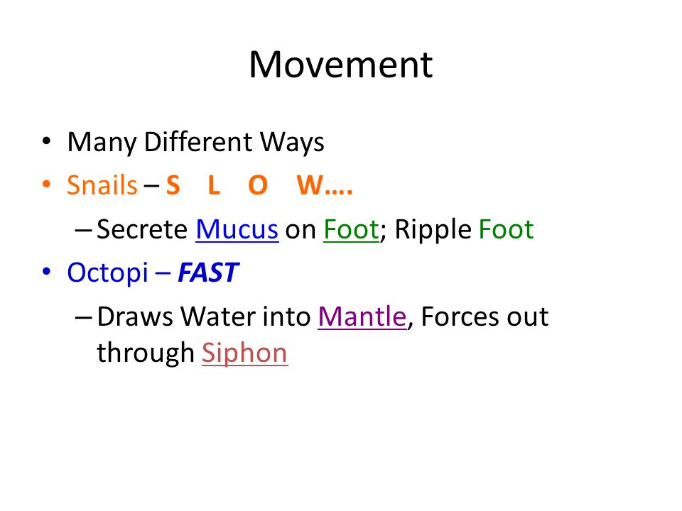 Movement Many Different Ways Snails – S L O W….