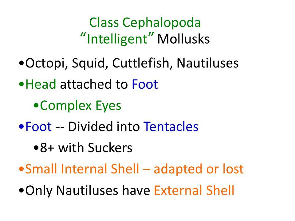 Class Cephalopoda Intelligent Mollusks
