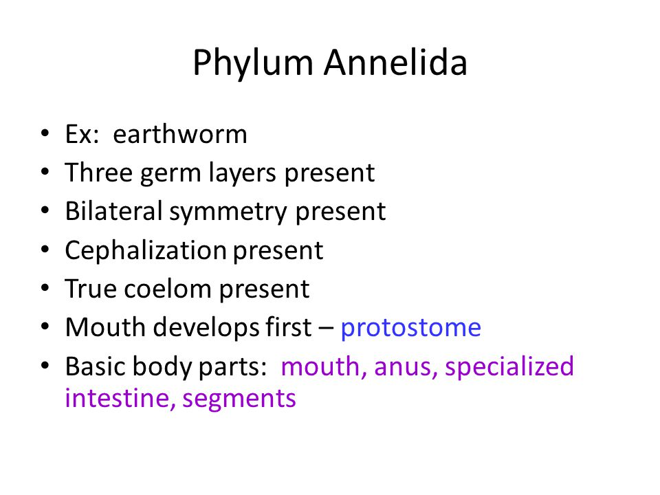 Phylum Annelida Ex: earthworm Three germ layers present