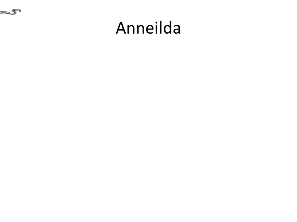 Anneilda