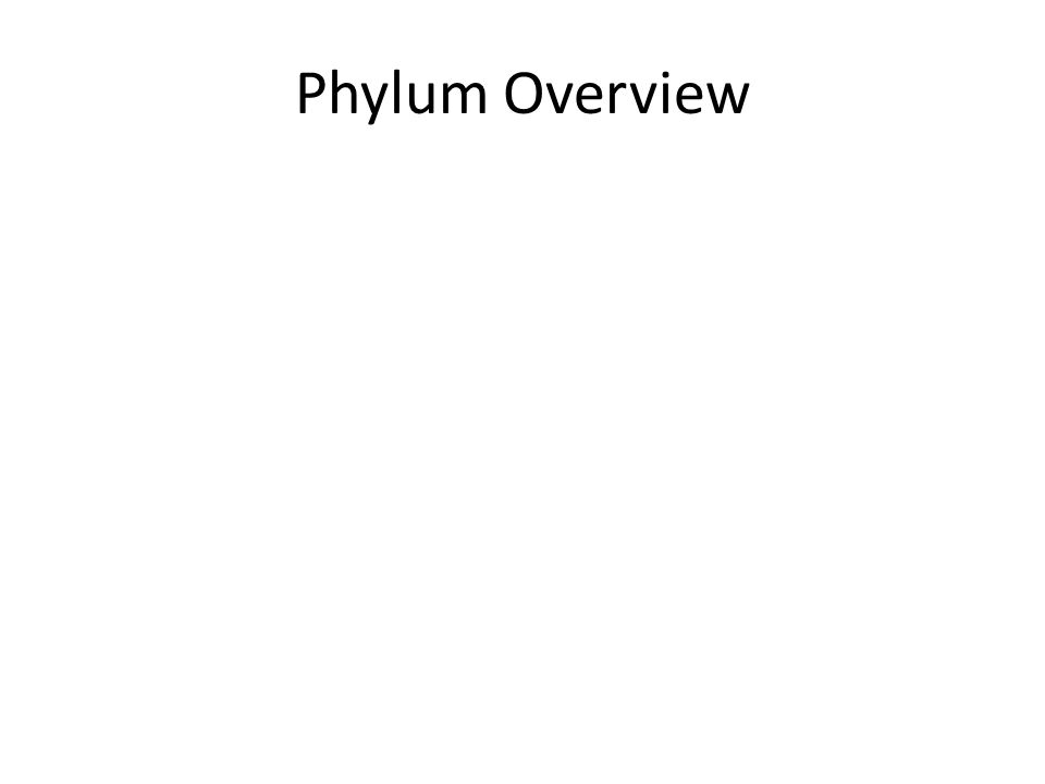 Phylum Overview Most 'successful' Phylum of All Time