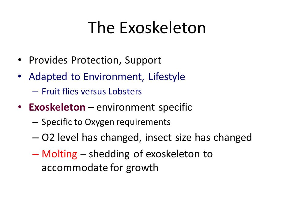 The Exoskeleton Provides Protection, Support