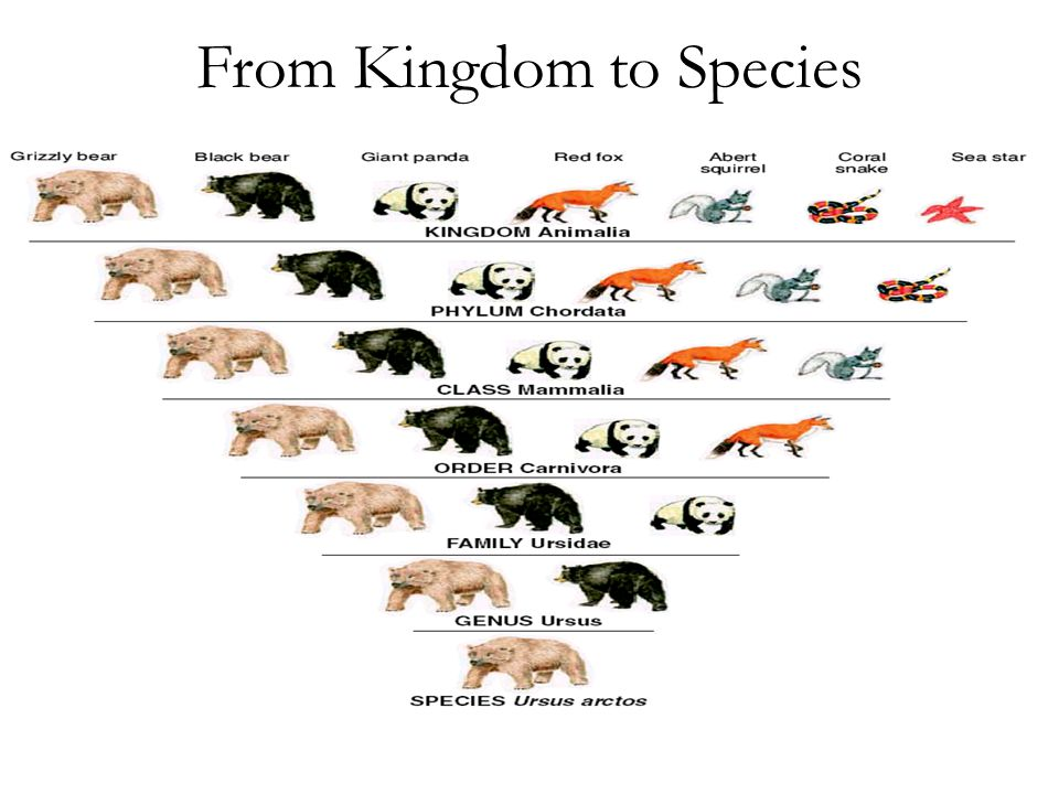 From Kingdom to Species