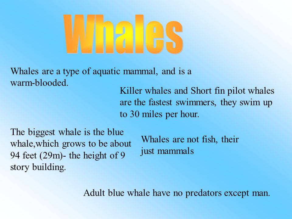Whales Whales are a type of aquatic mammal, and is a warm-blooded.