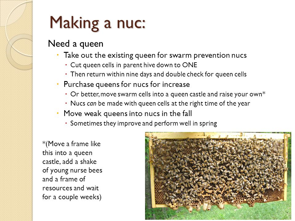 Making a nuc: Need a queen
