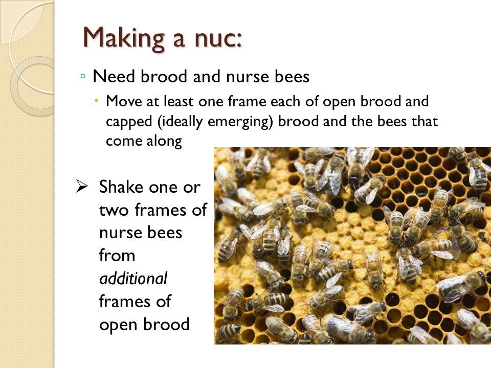 Making a nuc: Need brood and nurse bees