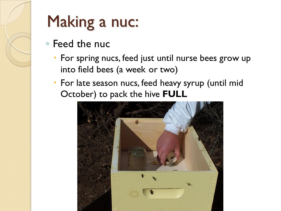 Making a nuc: Feed the nuc