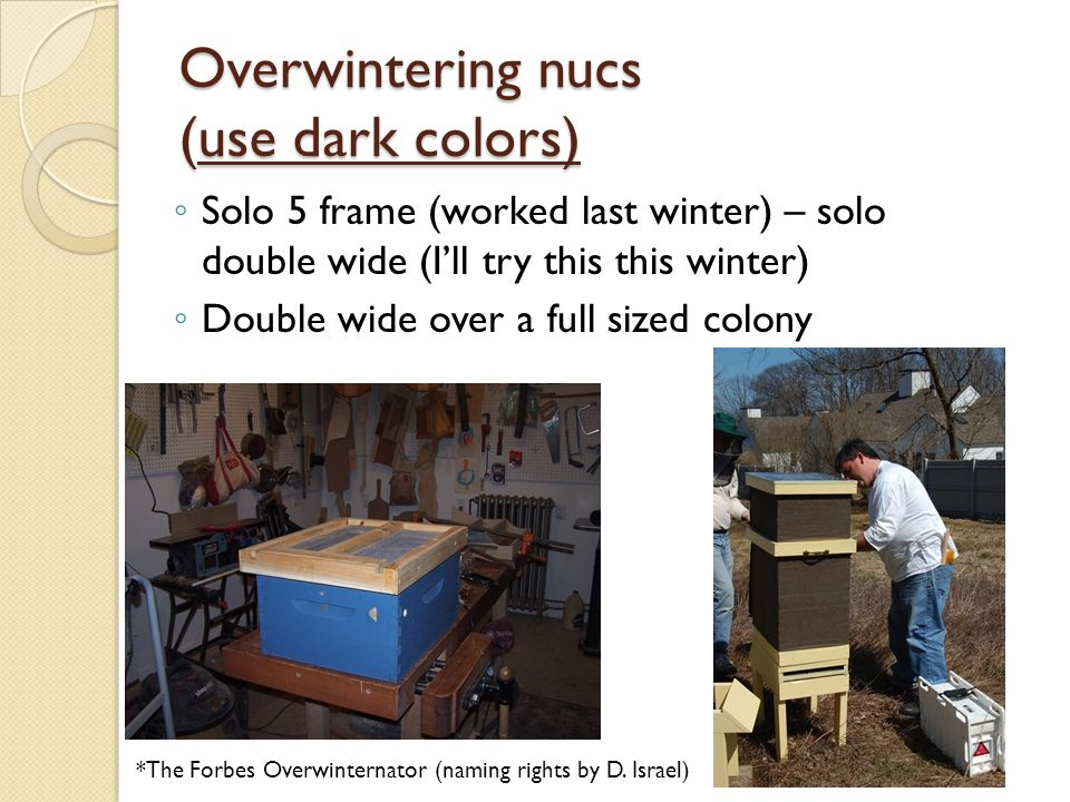 Overwintering nucs (use dark colors)