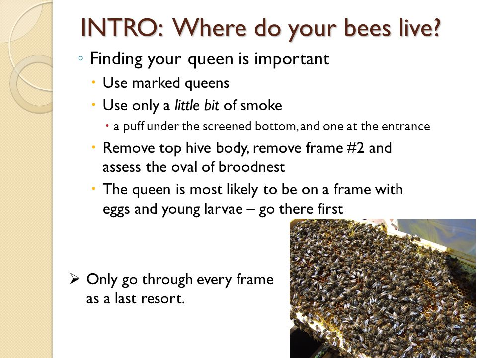 INTRO: Where do your bees live