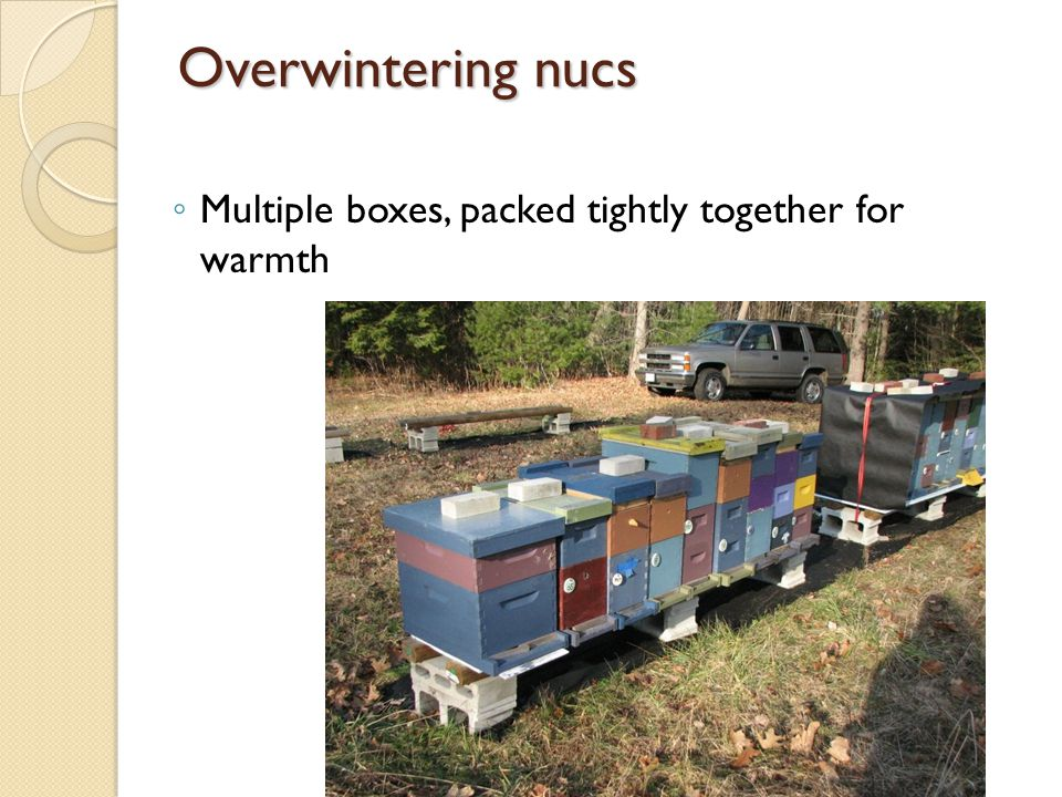 Overwintering nucs Multiple boxes, packed tightly together for warmth
