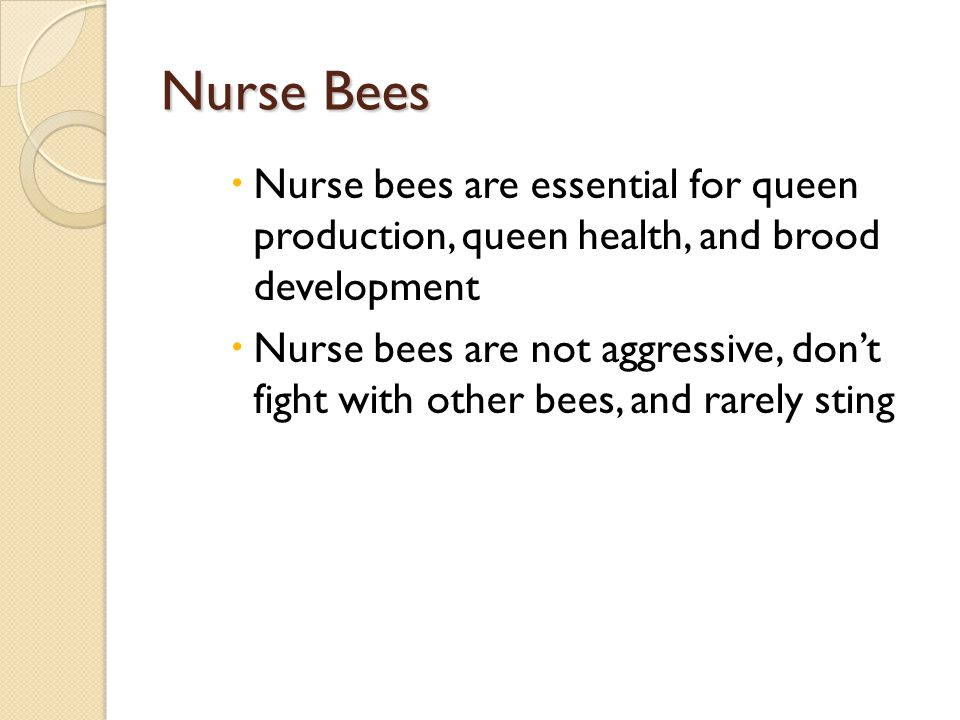 Nurse Bees Nurse bees are essential for queen production, queen health, and brood development.