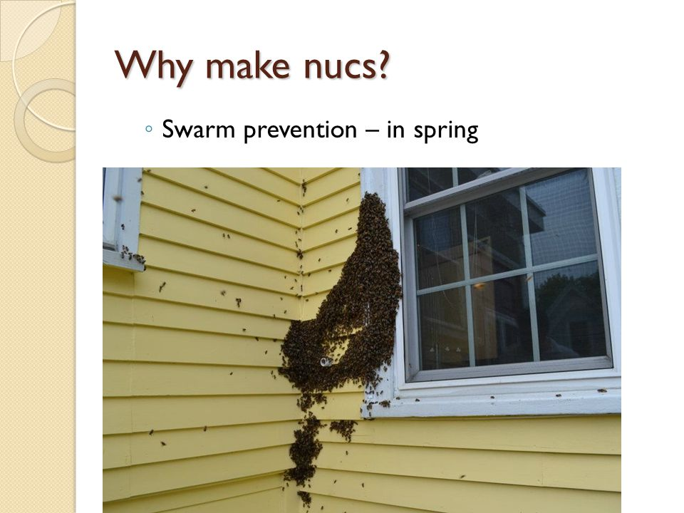 Why make nucs Swarm prevention – in spring