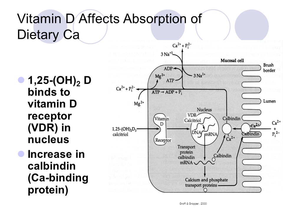 Vitamin D Affects Absorption of Dietary Ca