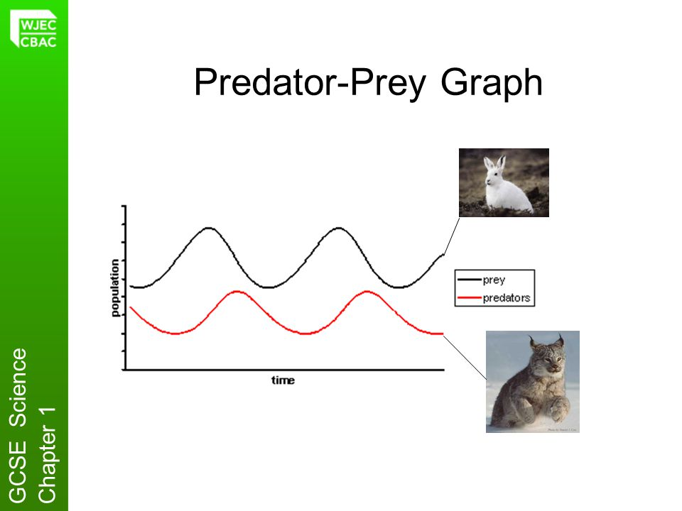 Predator-Prey Graph GCSE Science Chapter 1