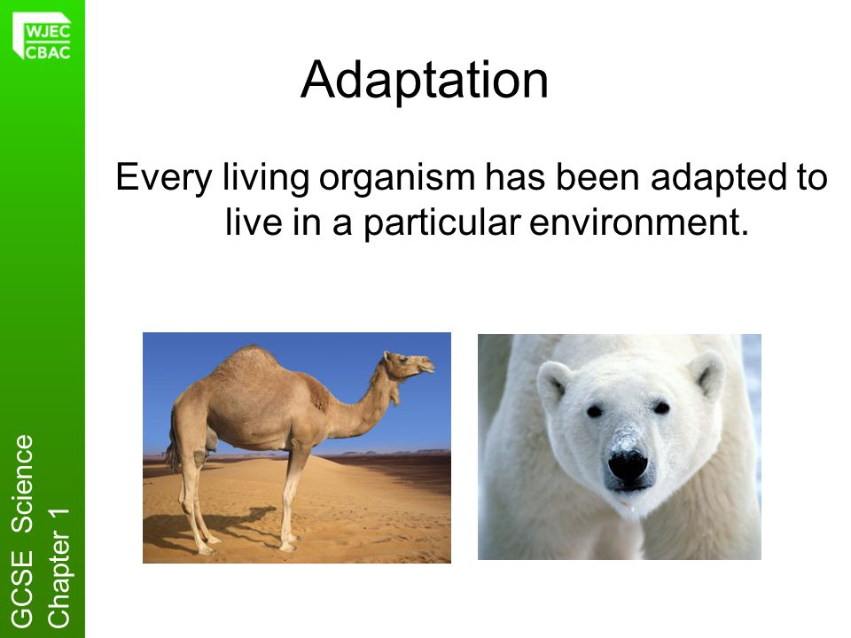 Adaptation Every living organism has been adapted to live in a particular environment. GCSE Science.