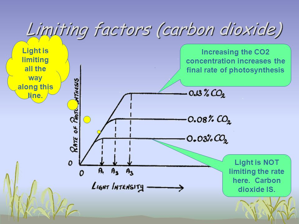 Limiting factors (carbon dioxide)