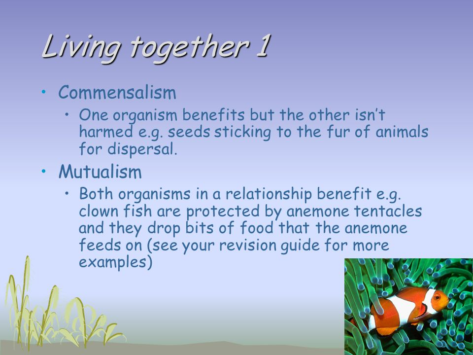 Living together 1 Commensalism Mutualism