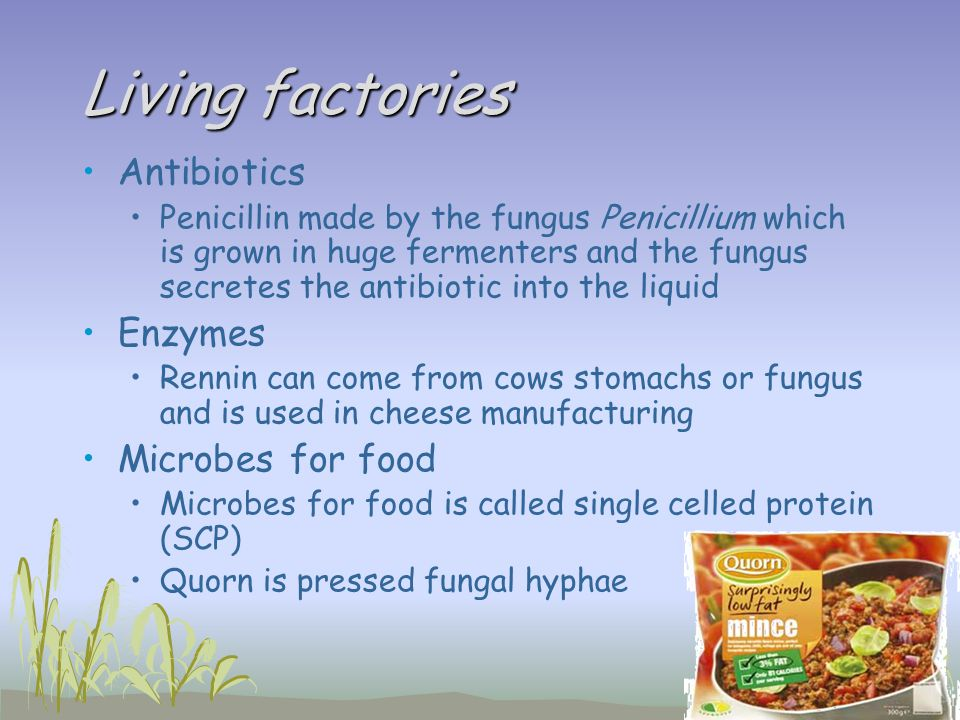 Living factories Antibiotics Enzymes Microbes for food