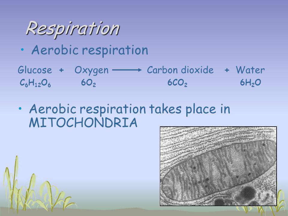 Respiration Aerobic respiration