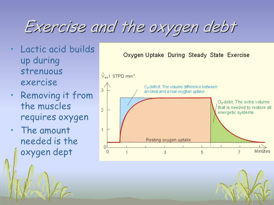 Exercise and the oxygen debt