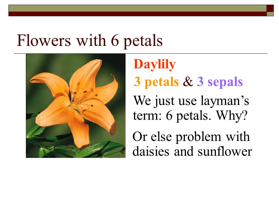 Flowers with 6 petals Daylily 3 petals & 3 sepals