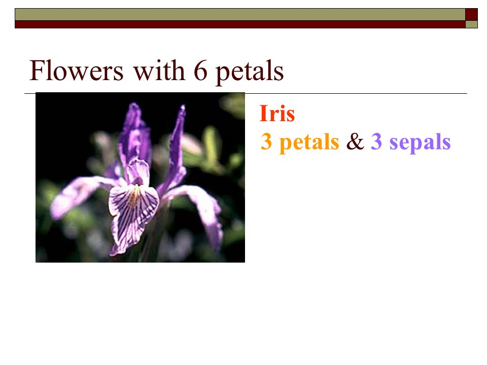 Flowers with 6 petals Iris 3 petals & 3 sepals