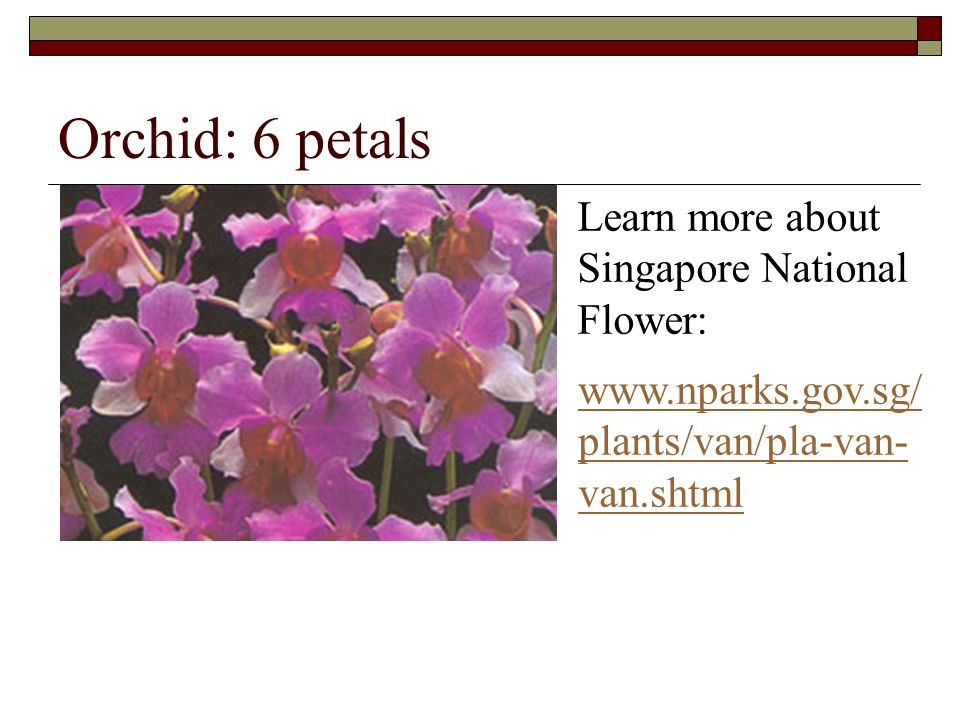 Orchid: 6 petals Learn more about Singapore National Flower: