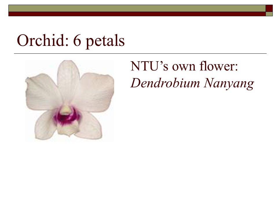 Orchid: 6 petals NTU's own flower: Dendrobium Nanyang