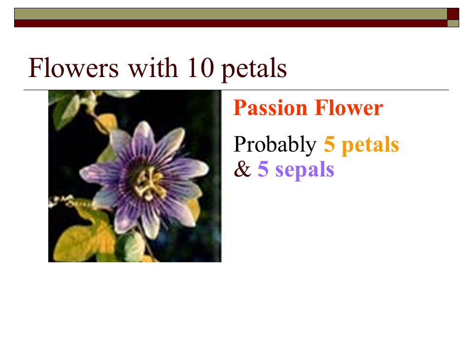 Flowers with 10 petals Passion Flower Probably 5 petals & 5 sepals