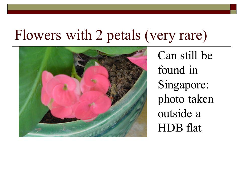 Flowers with 2 petals (very rare)