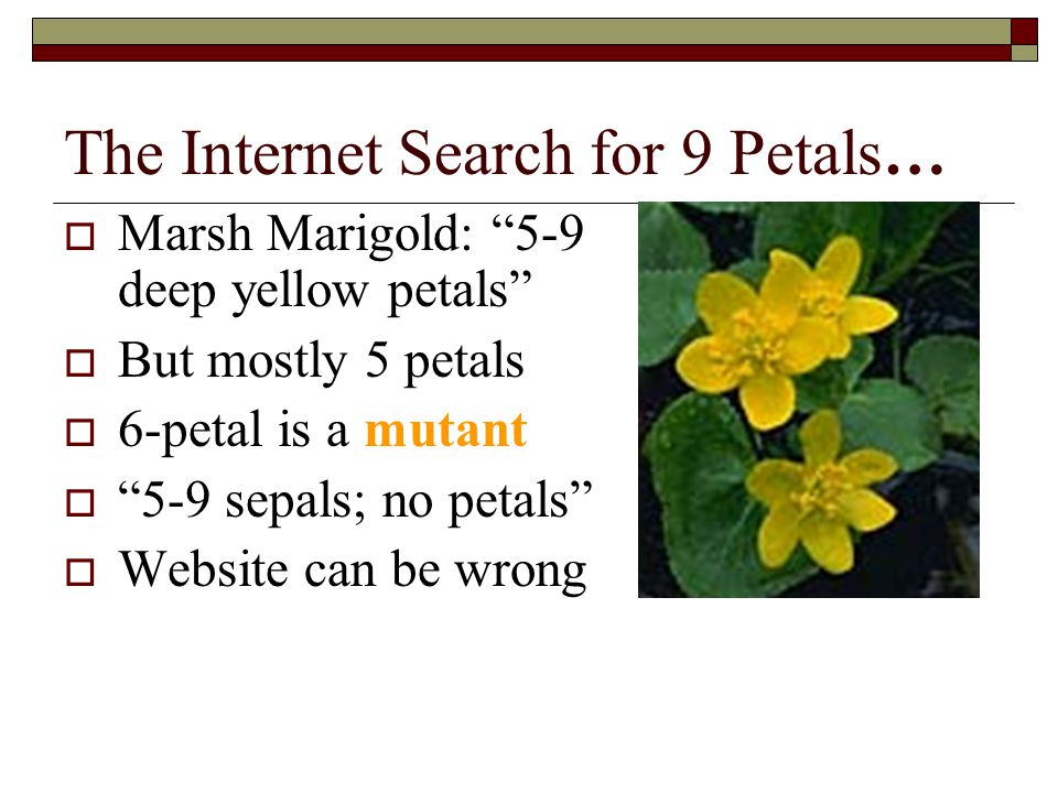 The Internet Search for 9 Petals…