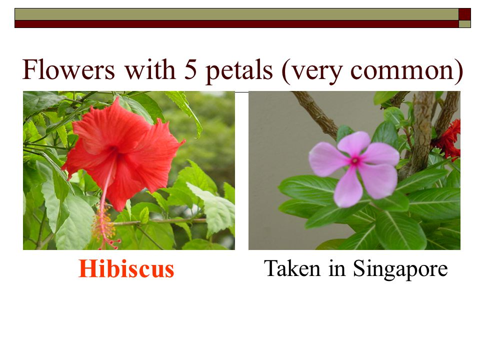 Flowers with 5 petals (very common)