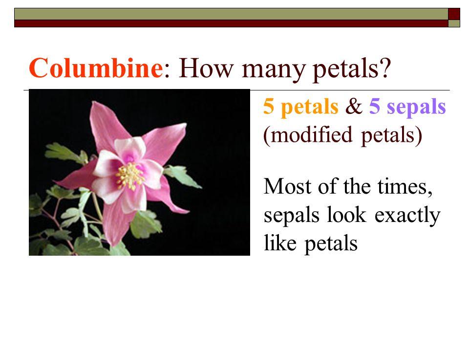 Columbine: How many petals