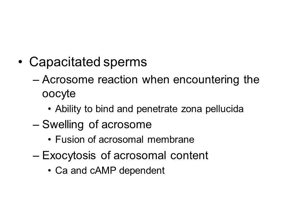 Capacitated sperms Acrosome reaction when encountering the oocyte